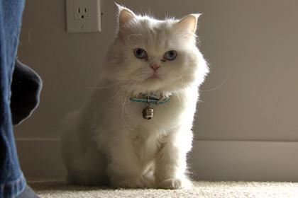 cat Sherry